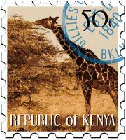 GREEN COFFEE Kenya Fancy Mark